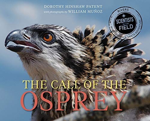 The Call of the Osprey (Scientists in the Field) (English Edition)