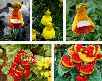 Nouvelle arrivée! 50 PCS / pack Jaune Avec Noir Playmates Petunia Graines Garden Home Bonsai Usine Pétunia Fleur, # 3WHXBG