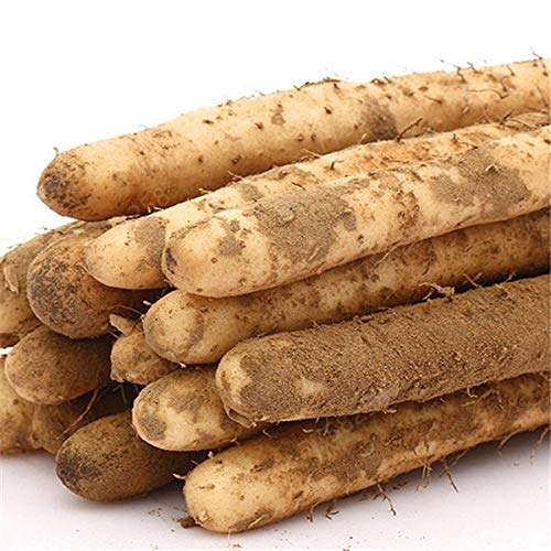 SANHOC 100 PC/Bag Chinesische Yamswurzel Bonsai essbare Pflanze zylindrische Wurzel hoch Ernährung gesund grün Bio-Gemüse: 2
