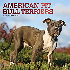 American Pit Bull Terriers 2020 12 x 12 Inch Monthly Square Wall Calendar with Foil Stamped Cover, Animals Dog Breeds (English, Spanish and French Edition) 9