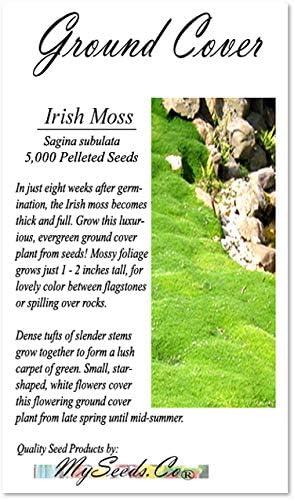 IRISH MOSS SEEDS, Sagina subulata, Heath Pearlwort, Perfect In Garden, Lawn Substitue or In-Between Stones, Groundcover Heath Pearlwort, Zones 4-10 - By MySeeds.Co (10000 Seeds)