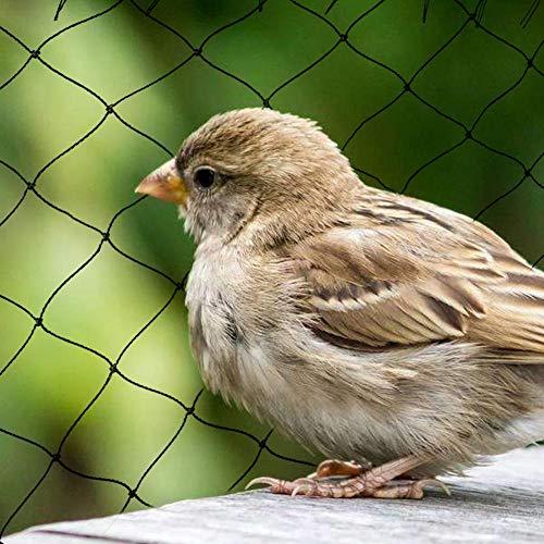 Filet anti-oiseaux extra fort, 10 15 20 25 30M large x 5m lotissement jardin 2x2cm