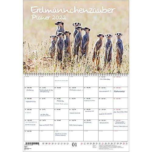 Planificador de suricatos DIN A2 desplegado – Calendario para 2022 suricatos – Set de regalo Contenido: 1 x calendario, 1 x tarjeta de felicitación de Navidad y 1 x en total 3 piezas
