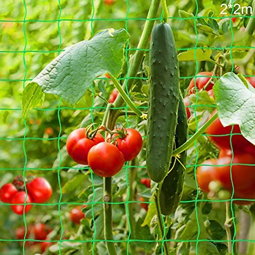 Malla Plantas de Vid,Multiusos Malla,Tomates y Plantas trepadora,Red de Enrejado Jardín,Valla de Cultivo,malla vegetal para frijol de guisante,Red para Pájaros,Poliéster Red de Jardin (2 * 2m)