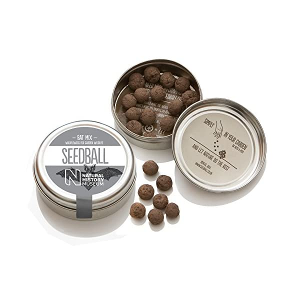 Seedball 20pc Flower for Garden Beds and Planters