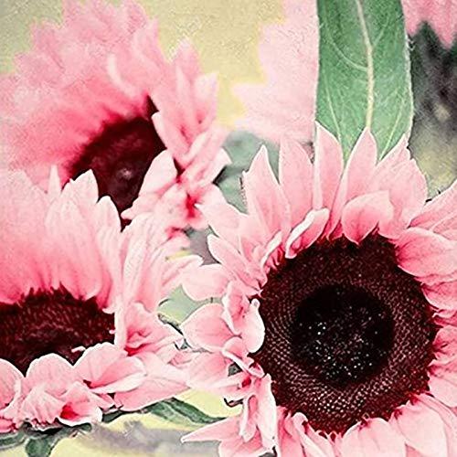 TOYHEART 50Pcs Semi di Fiori Premium, Semi di Semi di Girasole Rosa Fiore Naturale Grande Richiesta d Acqua per Finestra Semi di Girasole