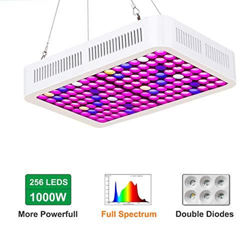 1000 watt lamp - 3