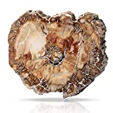"CXD-GEM Petrified Wood Slab Specimen Polished Fossilized Tree Branch Slice for Home Decoration Irregular Stone, Large Slice, 2.7""-3.5"""