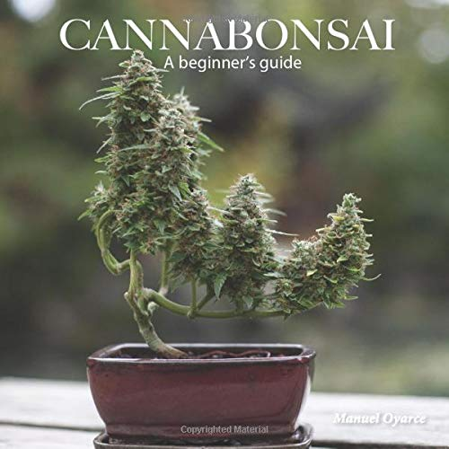 Cannabonsai: A Beginners Guide