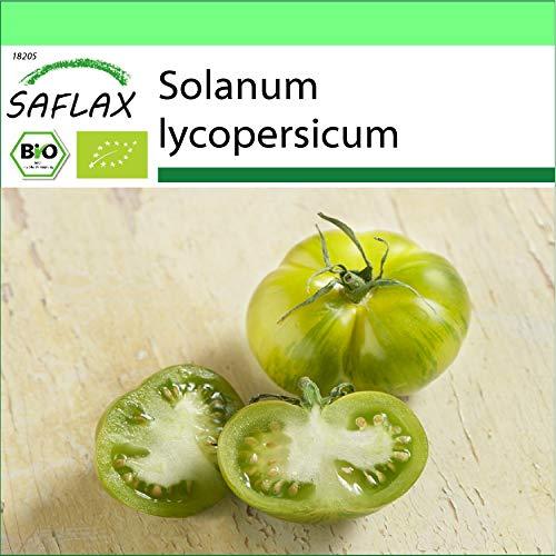 SAFLAX - Jardin dans la boîte - BIO - Tomate - Verte zébrée - 10 graines - Avec pot en argile, support, substrat de culture et engrais - Solanum lycopersicum