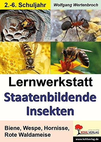 Lernwerkstatt Staatenbildende Insekten: Biene, Wespe, Hornisse, Rote Waldameise: Bienen, Wespen und Ameisen