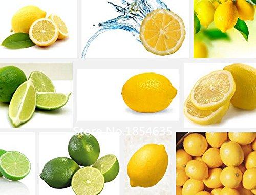 Plant Garden 50pcs graines de citron, de haute qualité en pot graines de fruits des plantes Bonsai Seed