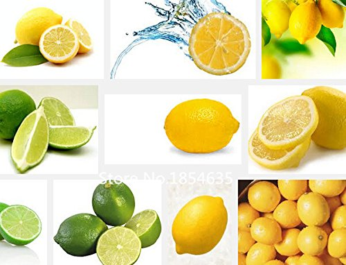 Plant Garden 50pcs graines de citron, de haute qualité en pot graines de fruits des plantes Bonsai Seed