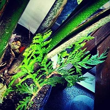 Forest TwentyNeinteen