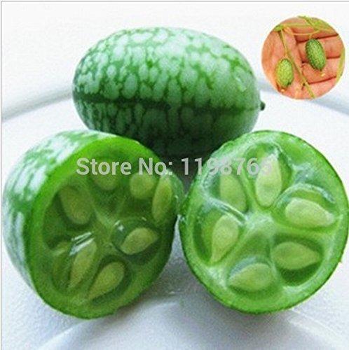 20pcs / lot chinois Graines vert Tea Tree Bonsai usine de bricolage thé pour la santé Bonsai Tea Tree jardin