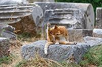 大人のための大人の子供木製パズル300ピース キャットウォッシュ廃墟ギリシャ挑戦的なDIYアセンブルクラシックユニークギフト