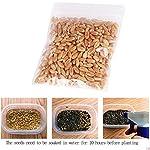 Graines d'herbe de chat de Bornbayb graines d'herbe de blé pour le chat, paquet au-dessus de 800 PCs et 1600 PCs #2