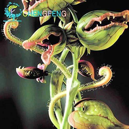 Pinkdose® 50 Teile/paket Topf Insektenfressende saat Bonsai Dionaia Muscipula Riesen Clip Venusfliegenfalle Bonsai Fr Hausgarten: We i
