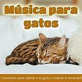 Música de Cuna Para Gatitos