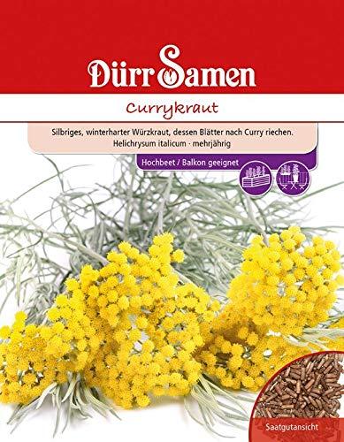 Currykraut, mehrjähriger Duftstrauch dessen Blätter nach Curry riechen, Verwendung als Würzmittel