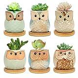 EMORE Vasi per fioriera in Ceramica succulenta 6CM Owl, Confezione da 6 vasi per Fiori Gufo con Vassoio in bambù, Vaso per Piante in Vaso di Cactus