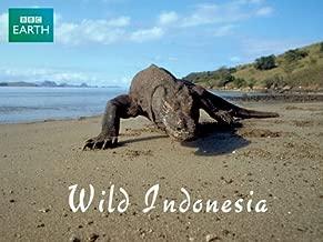 wild indonesia documentary