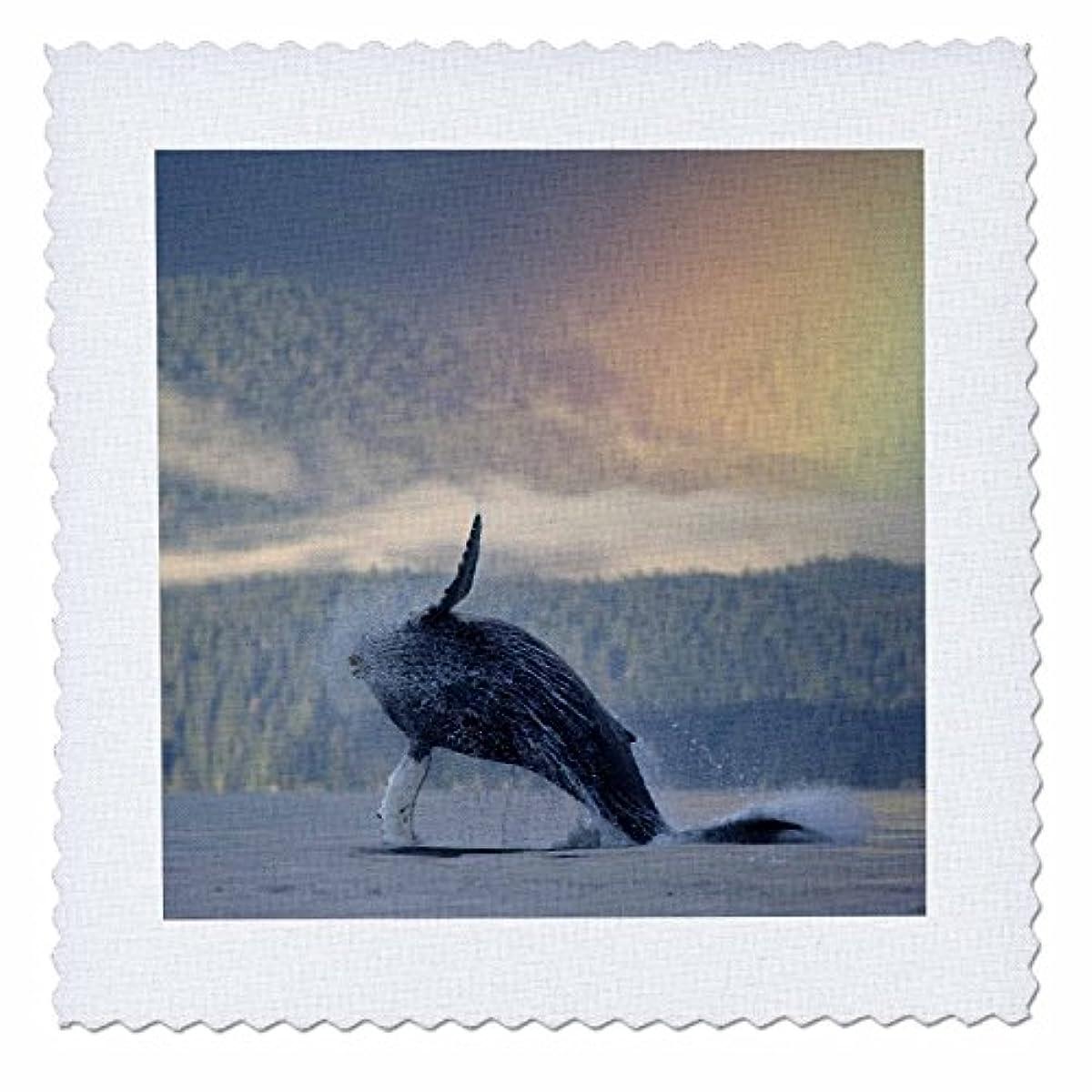 3dRose qs_87667_5 Alaska, Kodiak Island, Sea Otter wildlife-US02 PSO1053-Paul Souders-Quilt Square, 14 by 14