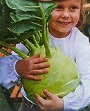 Cavolo rapa, semi di cavolo rapa gigante - Brassica oleracea convar. acephala alef. var. gongylodes - semi