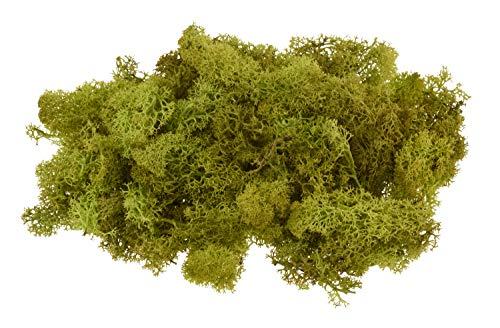 100g echtes Islandmoos Gesteck basteln 100% Natur Dekoration Modellieren Floristik Maigrün