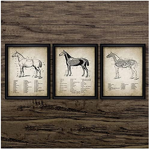 BINGJIACAI Vintage Horse Anatomy Canvas Poster Print Horse Anatomy Illustration Biología Arte de la pared Pintura Imágenes Regalos veterinarios Decoración de oficina-40x50cmx3 Sin marco