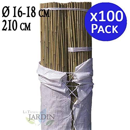 TUTOR DE BAMBU 210 cm, diámetro 16-18 mm. Uso agrícola para sujetar árboles, plantas y hortalizas. Pack ahorro de 100 Cañas de bambú