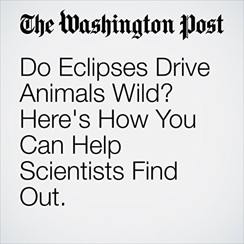 Do Eclipses Drive Animals Wild? Here's How You Can Help Scientists Find Out. copertina