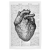 artboxONE Poster 30x20 cm Anatomie Schwarzweiß Heart