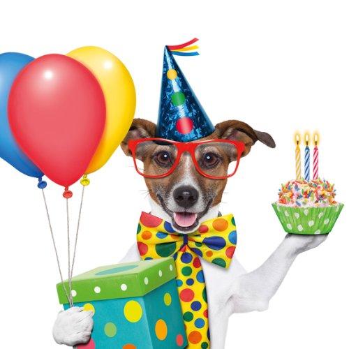 Chico - het feestje tier: set met 8 grappige uitnodigingskaarten voor kinderverjaardag in formaat 14,8 x 14,8 cm/inclusief 8 vierkante enveloppen van Edition Colibri.