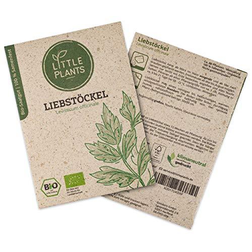 Little Plants BIO-Liebstöckelsamen (Levisticum officinale) Maggikraut | BIO-Kräutersamen | Nachhaltige Verpackung aus Graspapier | Kräuter-Samen | BIO-Saatgut für ca. 80 Liebstöckel-Pflanzen