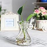 Skyeye Jarrón de Jacinto de Vidrio Transparente,Decoracion Adecuado para Plantas pequeñas en macetas o Flores