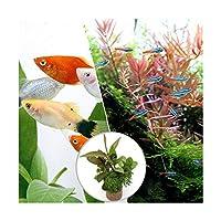 (熱帯魚)(水草)ビギナースタートセット ネオンテトラ(10匹)+ミックスプラティ(4匹) 北海道・九州航空便要保温