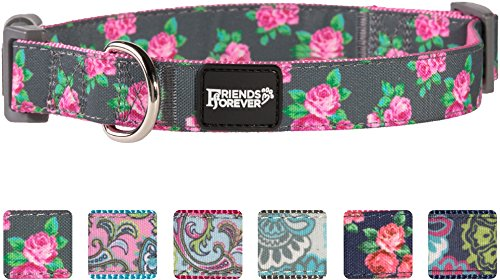 Friends Forever Paisley Collar
