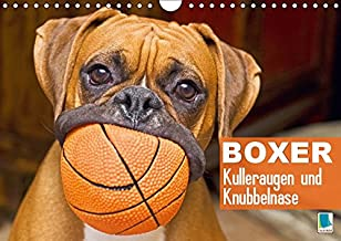 Boxer Hunderasse – Geschichte, Charakter und Pflege