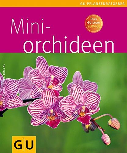 Mini-Orchideen