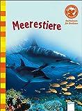 Der Bücherbär: Sachwissen für Erstleser: Meerestiere
