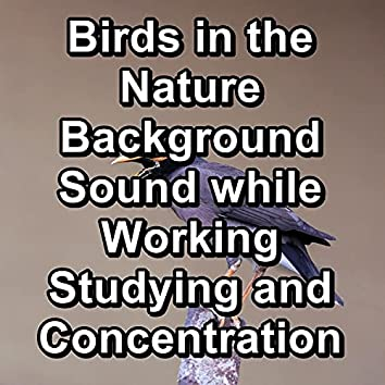 Birds in the Nature Background Sound while Working Studying and Concentration