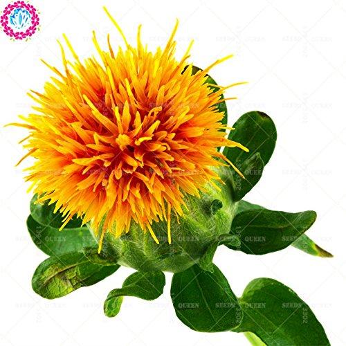 Prix ??bas! 50 pcs/lot de graines de carthame fleur rouge bonsaïs en pot pour la maison et jardin médicinal plantation d'herbes vivaces freeshipping