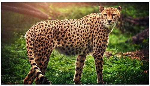 DYYjh Kit completo de pintura de diamante 5D, para manualidades, bordado de leopardo, redondo, estrás, mosaico, punto de cruz, decoración del hogar, regalo, artesanía, 40 x 50 cm