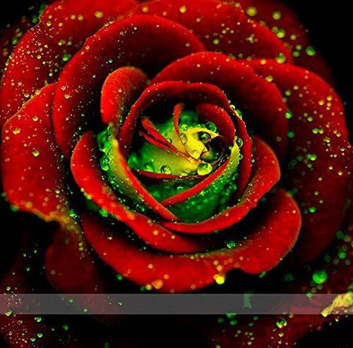 semences graines 100 graines Big Red Green Rose, couleur rare, arôme riche, bricolage jardin Rose fou Plante