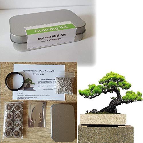 Kit de cultivo de bonsái de pino negro japonés para juegos de bonsái y equipo