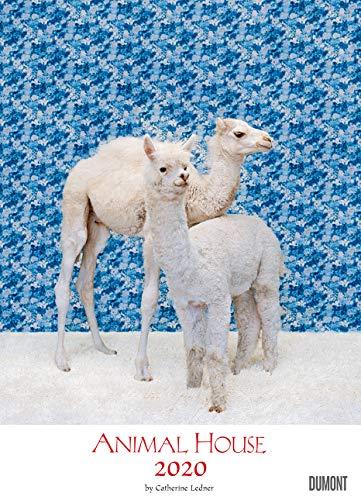 Animal House Kalender 2020 – DUMONT Tier-Kalender – Foto-Kunst – Poster-Format 49,5 x 68,5 cm