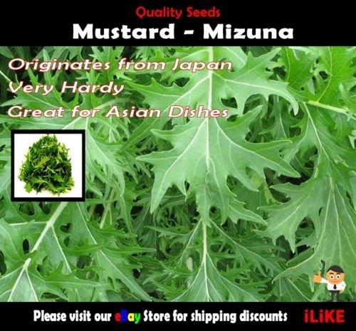 Moutarde Mizuna 100 Semences potagères minimum jardin d'herbes aromatiques. Origine japonaise.
