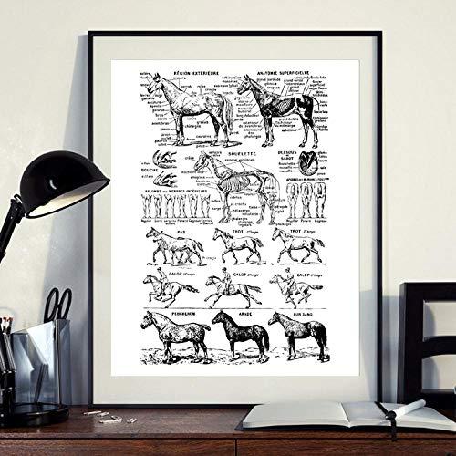Terilizi Canvas Schilderij Print zwart-wit Gastoster Paard Anatomie illustratie Wandkunst Afbeelding Wanddecoratie 50 * 70cm - niet ingelijst