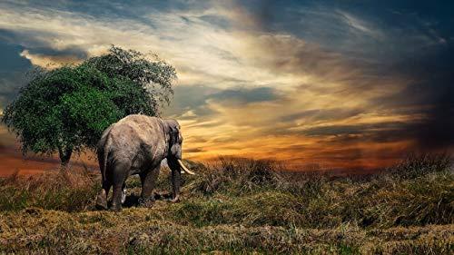 Puzzle 1000 Piezas Para Adultos De Madera Niño Rompecabezas Elefante En La Puesta De Sol Juego Casual De Arte Diy Juguetes Regalo Interesantes Amigo Familiar Adecuado
